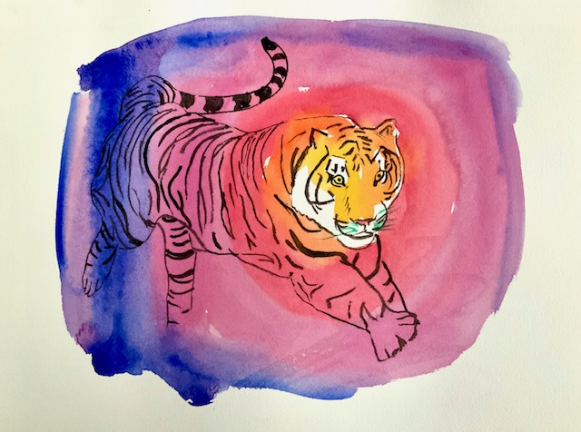 Tiger, akvarel, øje, nattesyn, nethinde, pupil, vertikal spalte,