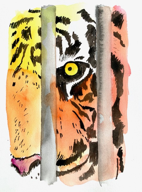 Tiger, akvarel, nabo, barndomsdrøm, bildæk, pressen, tv,