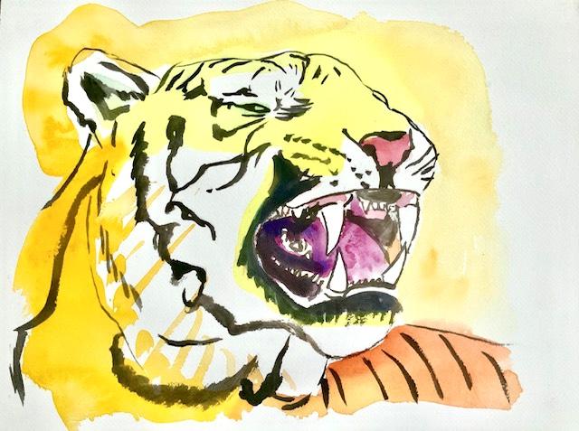 30 tænder, kattearter, hjørnetænder, følsomme, tiger, akvarel,