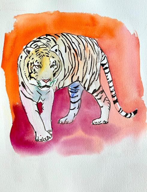 Hvid, tiger, akvarel, albino, mutation, gen, feomelanin, eumelanin, striber