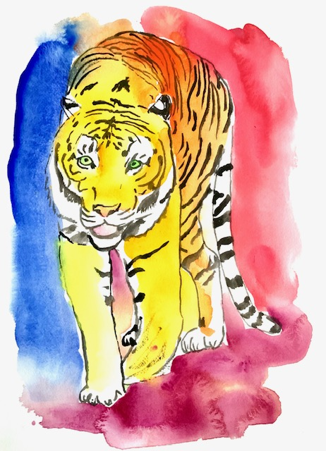 Antenne, tiger, akvarel, knurhår, navigere, snudeknurhårene, øjnene, totter