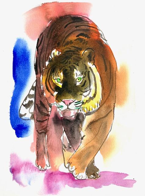 Tiger, akvarel, melanistiske, sort, mørk, melanisme, malaniner, leopard, jaguar, panter,