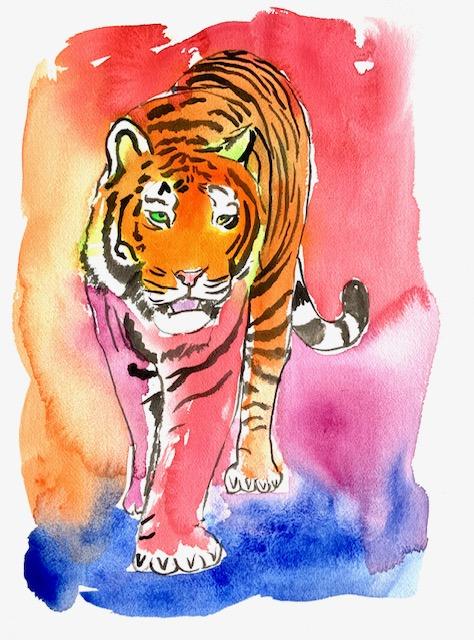 Tiger, akvarel, huske, korttidshukommelse, langtidshukommelse, tilpasningsevne,