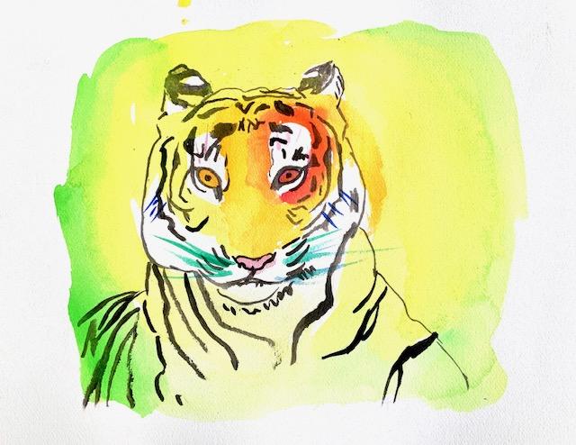Akvarel, tiger, tegning, striber, rovdyr, volumen, planer, rummet, kontraster,