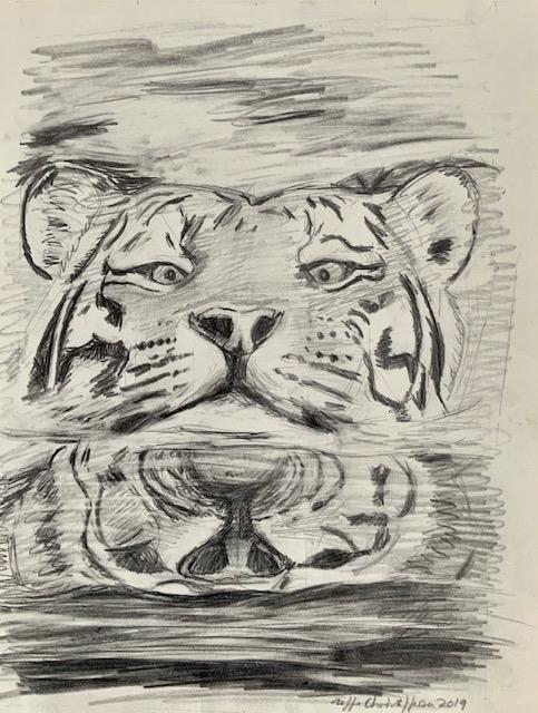 Tigre, vand, tegning, drikke,kattedyr, bader, søer, vandløb, køleeffekt, svømme, svømmehud,