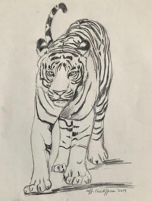 Tiger, tegning, solidarisk, løve, bytte, kød, elg, hjortearter, svin, køer, heste, bøfler og geder.