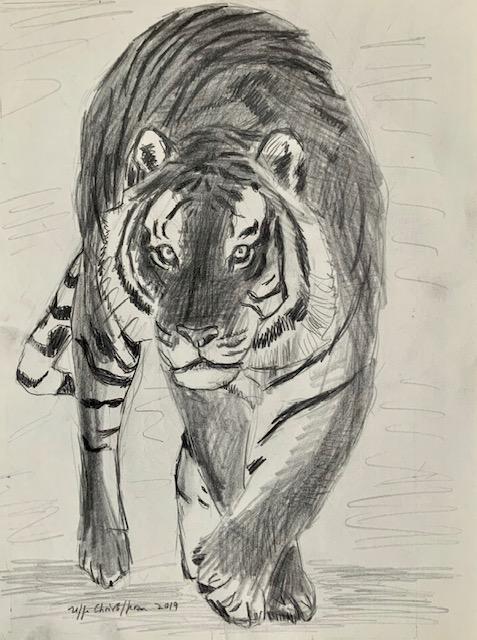 Tiger, tegning, sort, Melanisme, melaniner, leopard, jaguar, panter,