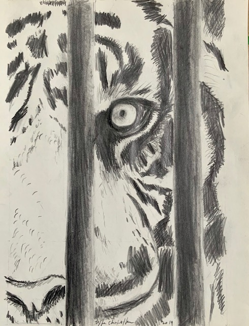 Nabo, tiger, tegning, brøler, drømme, sydfransk,