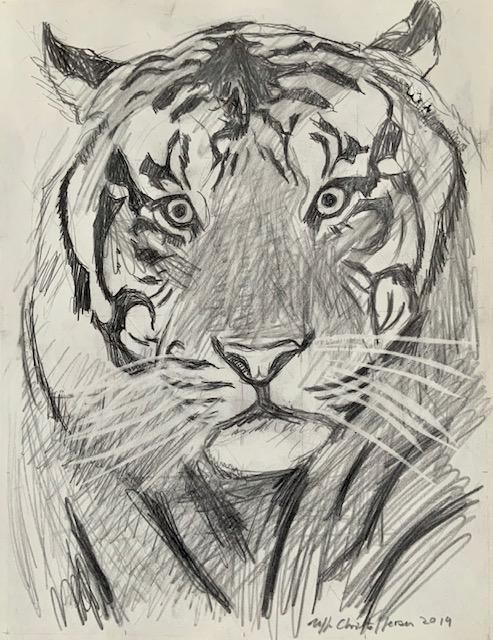 Knurhår, sanse, følsomme, tiger, tegning, knurhår-tire