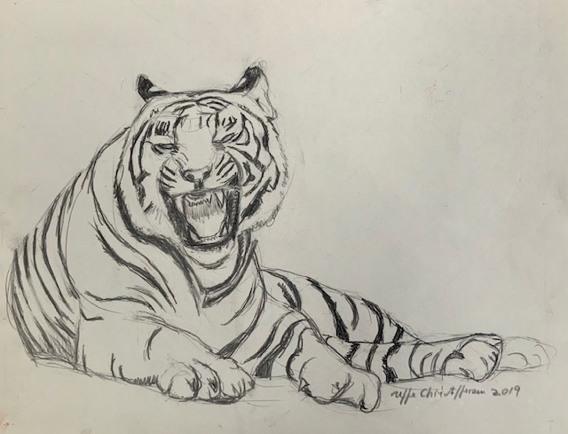 Ocelli, øret, ører, tiger, tegning, lilleøje, pseudo-øjne, kommunokation,