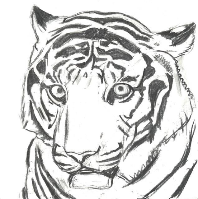 Uffe Christoffersen. Atelier-Kaiserborgen. Stadie 1. Tiger portræt - 50x50 cm 2021 - Tegnet op med kul på hvidt lærred.