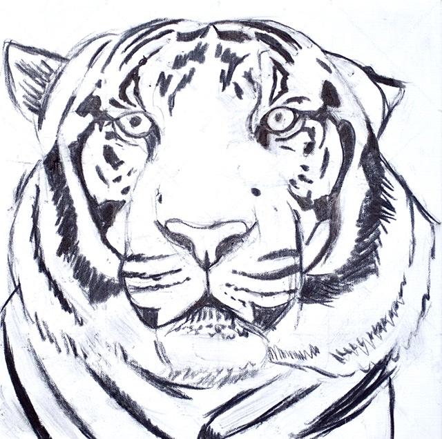 UFFE CHRISTOFFERSEN. Atelier-Kaiserborgen. Stadie 1. Tiger portræt II - 50x50 cm 2021 - Tegnet op med kul på hvidt lærred.